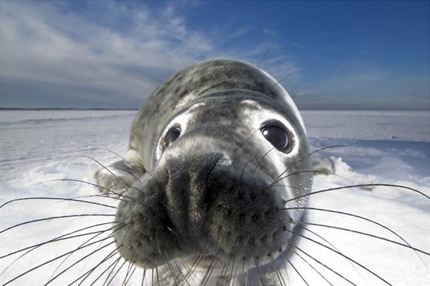 British-Wildlife-Photographer-of-the-Year-Awards-image-c-Mark-Smith