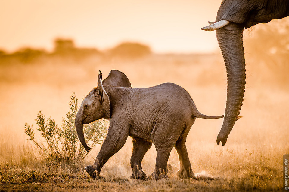 elephant-baby-botswana-africa-the-best-destinations-for-an-all-inclusive-vacation
