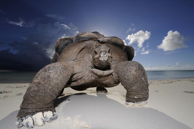 tortoise-wildlife-photographer-of-the-year