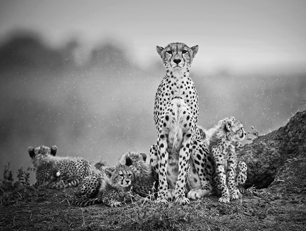 wildlife_nature_04